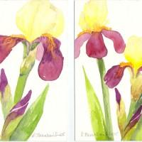 Iris-Duo