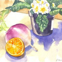 Primrose-Turnip-and-Orange