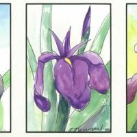 Three-Iris