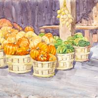 Squash-Harvest